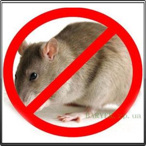 дератизация от черных крыс