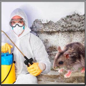 дератизация от мышей в Запорожье